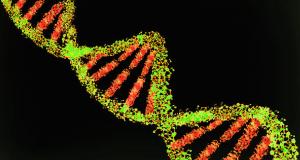 Genoma humà