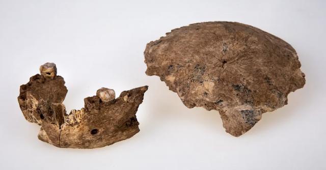 Fòssils Nesher Ramla